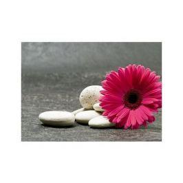 Gerbera pink - plakat premium