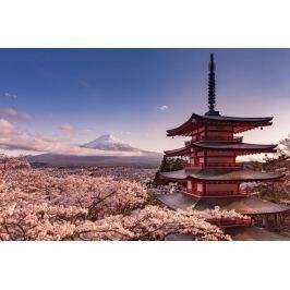 Fudżi Kwiat Wiśni Japonia - plakat