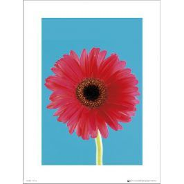 Flower Bright - plakat premium