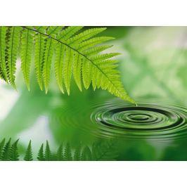 fototapeta zielony liść 4-730