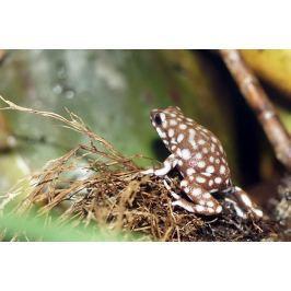 Fototapeta na ścianę żaba w białe kropki FP 2916