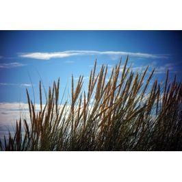 Fototapeta na ścianę trawy i niebo FP 2021