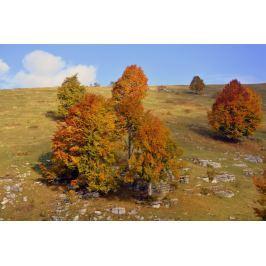 Fototapeta na ścianę polana drzew FP 3982
