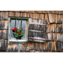 Fototapeta na ścianę pelargonia w otwartym oknie FP 117