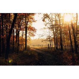 Obraz ścieżka przez las FP 1725 P