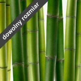 fototapeta bambus 02